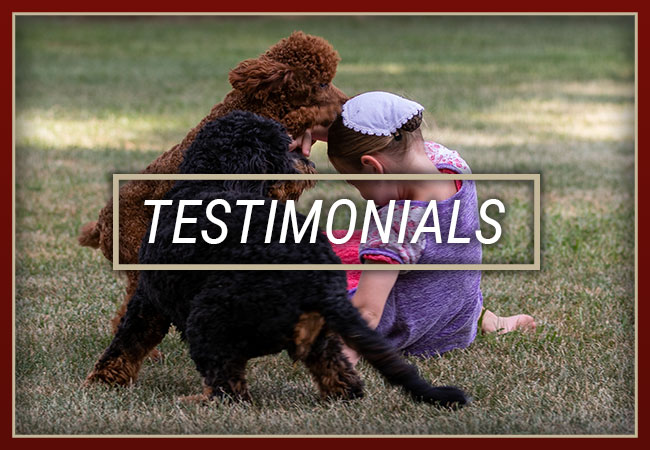 Central Illinois Doodles Testimonials